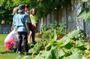 O warzywkach, ekologii i zdrowym odżywianiu