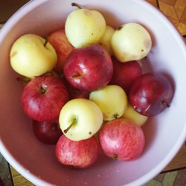 Jabłka w misce